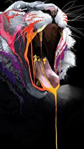 Hintergrundbilder Große Katze Löwe Schwarzer Hintergrund Gähnt Zunge Schnurrhaare Vibrisse Tiere