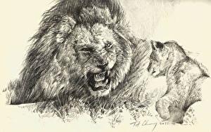 Hintergrundbilder Große Katze Löwe Jungtiere Gezeichnet Grinsen Schwarzweiss
