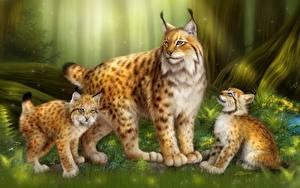 Fotos Große Katze Luchse Gezeichnet Jungtiere Drei 3