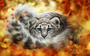 Hintergrundbilder Große Katze Schneeleopard Jungtiere Gezeichnet Schwanz Blick Tiere