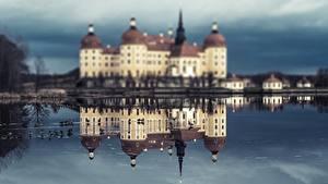 Bilder Vögel Burg Deutschland Spiegelt Moritzburg Castle, Saxony Städte