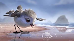 Fotos Vögel Küste Piper (2016) Zeichentrickfilm