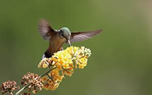 Bilder Vogel Kolibris Unscharfer Hintergrund Ast Tiere