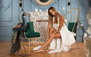 Bilder Vögel Melena A Maria Stühle Braune Haare Kleid Hand Bein Sitzend Mädchens