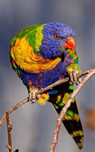 Bilder Vogel Papagei