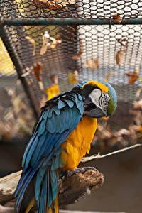 Fotos Vogel Papagei Eigentliche Aras