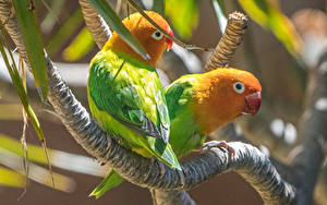 Wallpaper Birds Parrots Branches 2 Animals