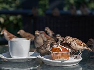 Desktop hintergrundbilder Vogel Sperlinge Kaffee Keks Tasse ein Tier