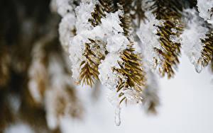 Hintergrundbilder Unscharfer Hintergrund Ast Schnee Fichten Eis
