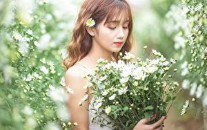 Hintergrundbilder Blumensträuße Kamillen Asiatisches Bokeh Braunhaarige
