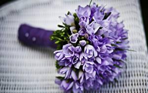 Hintergrundbilder Sträuße Lavendel Hautnah Bokeh Violett Blumen