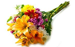 Bilder Blumensträuße Lilien Chrysanthemen Gerbera Weißer hintergrund Blüte