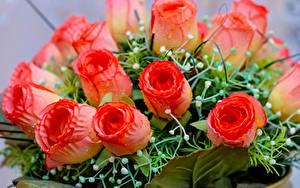 Hintergrundbilder Blumensträuße Rosen Nahaufnahme Blumen