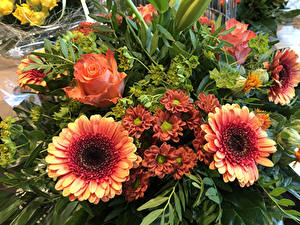 Bilder Sträuße Rosen Gerbera Chrysanthemen Blumen