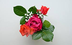 Fotos Blumensträuße Rose Grauer Hintergrund