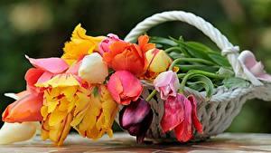 Bilder Blumensträuße Rosen Tulpen Stillleben Weidenkorb Blumen