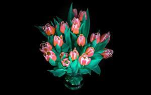 Hintergrundbilder Blumensträuße Tulpen Schwarzer Hintergrund Blumen