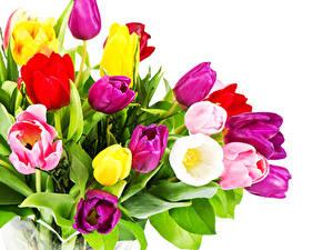 Fotos Sträuße Tulpen Hautnah Weißer hintergrund Blüte