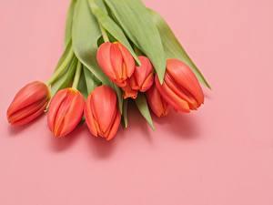 Desktop hintergrundbilder Blumensträuße Tulpen Rosa Hintergrund Rot Blüte