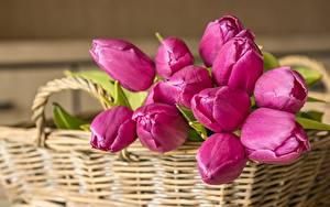Bilder Sträuße Tulpen Weidenkorb Rosa Farbe Blumen