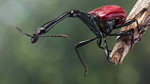 デスクトップの壁紙、、カブトムシ、昆虫、クローズアップ、giraffe weevil、動物