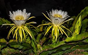 Bilder Kakteen Hautnah 2 Blüte