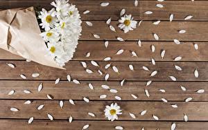 Fotos Kamillen Bretter Petalen Blumen