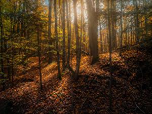Fotos Kanada Herbst Wald Bäume Blatt Copeland forest near Barrie