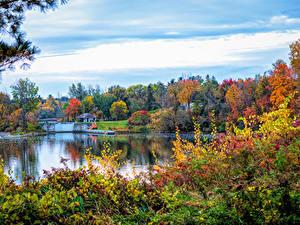 Fotos Kanada Herbst Fluss Bäume Strauch Canmore Alberta