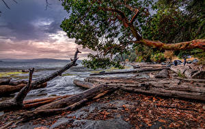 Picture Canada Coast Wood log Branches HDRI Nanaimo