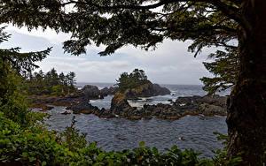 デスクトップの壁紙、、カナダ、海岸、大洋、岩、木、Ucluelet, British Columbia、