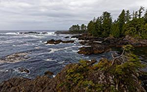 デスクトップの壁紙、、カナダ、海岸、大洋、岩石、木、Ucluelet, British Columbia、