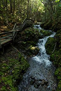 Hintergrundbilder Kanada Park Wälder Brücke Stein Bäume Laubmoose Bach Fundy National Park Natur