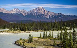 Bilder Kanada Park Gebirge Flusse Landschaftsfotografie Jasper park Fichten Athabasca River