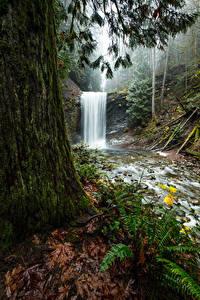 Fotos Kanada Park Wasserfall Bäume Laubmoose Benson Creek Falls Regional Park