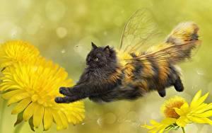 Bilder Hauskatze Bienen Originelle Löwenzahn Flügel Flug Tiere