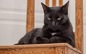 Hintergrundbilder Katze Schwarz Ruhen Blick Tiere