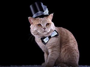 Hintergrundbilder Katze Schwarzer Hintergrund Der Hut Querbinder Starren Tiere