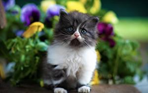 Bilder Katze Bokeh Kätzchen Starren