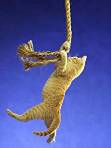 Hintergrundbilder Katze Farbigen hintergrund Kätzchen