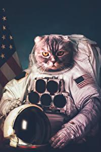 Hintergrundbilder Hauskatze Kreative Astronauten Uniform Helm ein Tier