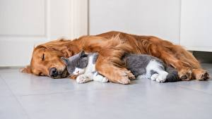 Desktop wallpapers Cats Dog Two Sleep Lying down animal
