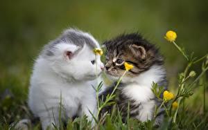 Wallpapers Cat Grass Bokeh Kittens Two Sweet Animals