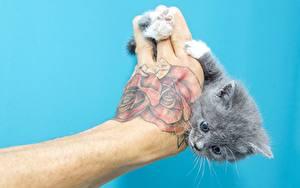 Bilder Hauskatze Hand Tätowierung Farbigen hintergrund Katzenjunges ein Tier