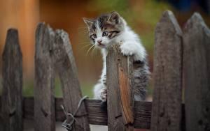 Fotos Hauskatze Kätzchen Zaun Aus Holz