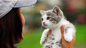 Bilder Katze Katzenjunges Blick Hand Tiere
