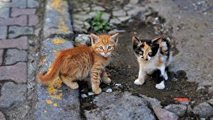Images Cat Kitty cat Two Animals