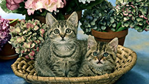 Image Cats Kitty cat Two Staring Animals