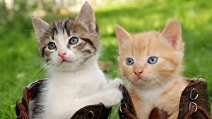 Wallpaper Cats Kittens 2 Glance Animals