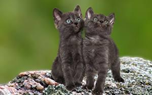 Wallpaper Cat Kittens 2 Glance animal